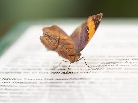 Botanischer Garten in Leipzig öffnet ab Samstag Innenbereich