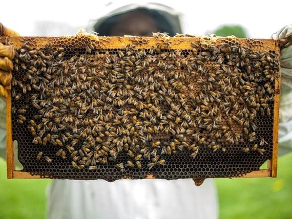 Umweltfreundliche Bienenwachstücher herstellen