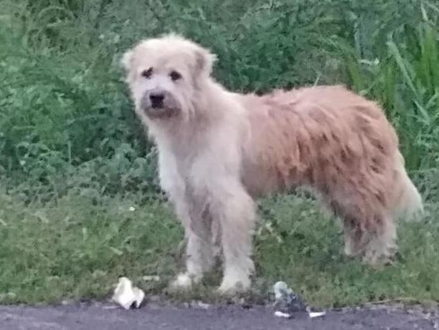 Herzergreifende Treue: Hund wartet vier Jahre auf sein Herrchen