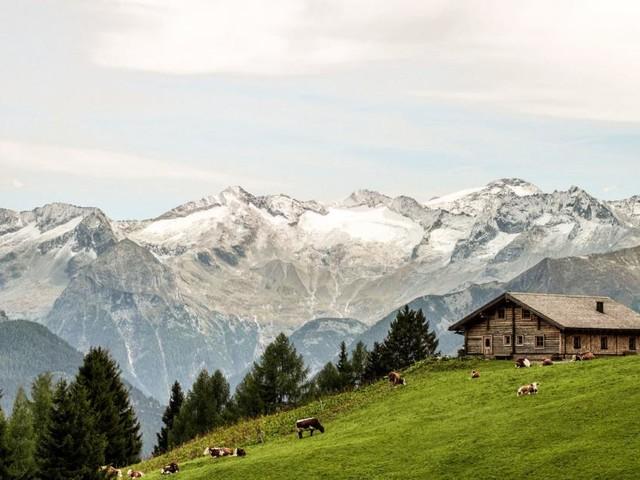 Glück am Berg - zu Almklassik mit den Weidetieren schunkeln: Die besten Tipps rund ums Wochenende