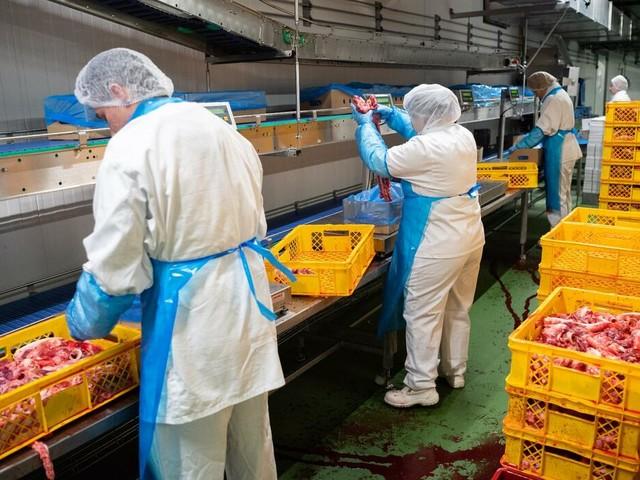 Nach Corona-Ausbrüchen: Schärfere Regeln für Fleischindustrie vorerst gestoppt