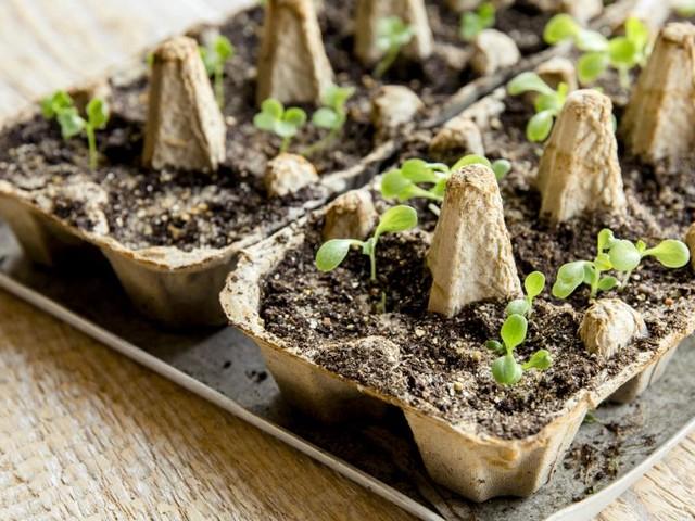 Wie man jetzt Gemüse drinnen richtig pflanzt