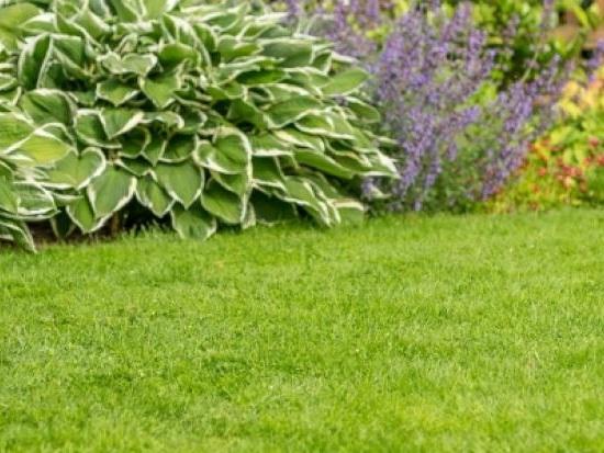 Rasenpflege leicht gemacht: Diese Profitipps machen Ihren Rasen frühlingsfit