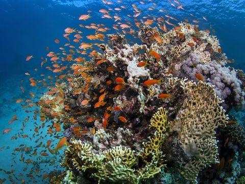 "Unesco: Great Barrier Reef nicht als ""bedrohtes"" Welterbe eingestuft"
