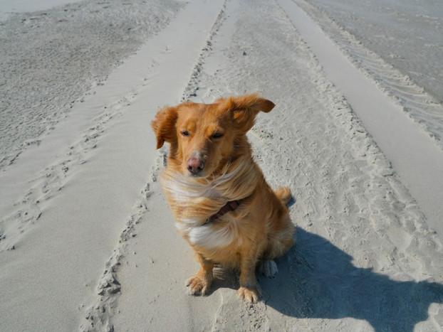 Juist mit Hund – die schönste Nordseeinsel mit dem Vierbeiner entdecken
