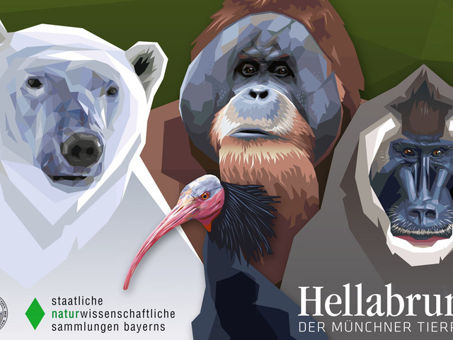 """Ausstellung """"Hellabrunn trifft ZSM"""" im Münchner Tierpark erzählt Geschichte des ältesten Geo-Zoos"""