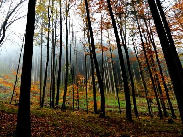 Zwei Leichen in Salzburger Wald entdeckt: Auch Toter identifiziert