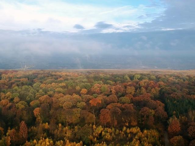 Kampf um den Hambacher Forst: Der Märchenwald