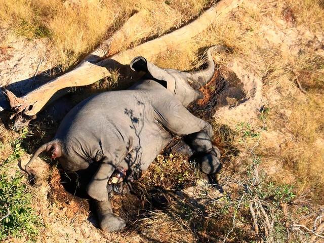 """Tag des Artenschutzes: Tierschützerin: """"Wir haben in den letzten 50 Jahren etwa 80 Prozent der Elefanten verloren"""""""