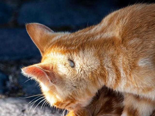 Zeckenbefall bei Katzen: Was dagegen hilft und wie Sie den Parasiten entfernen