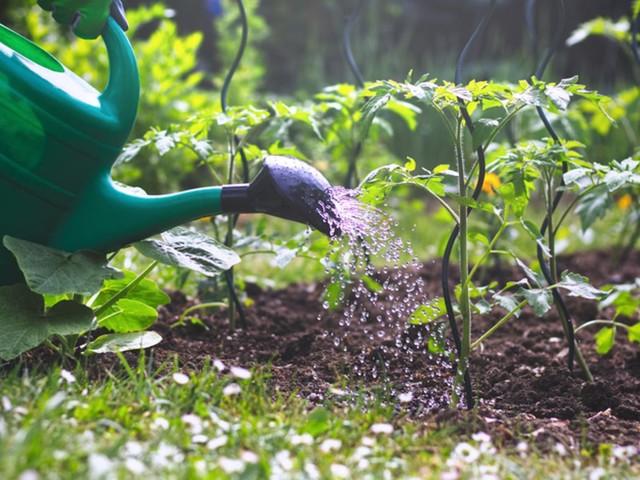Richtig bewässern: Wann ist die richtige Uhrzeit zum Pflanzengießen?
