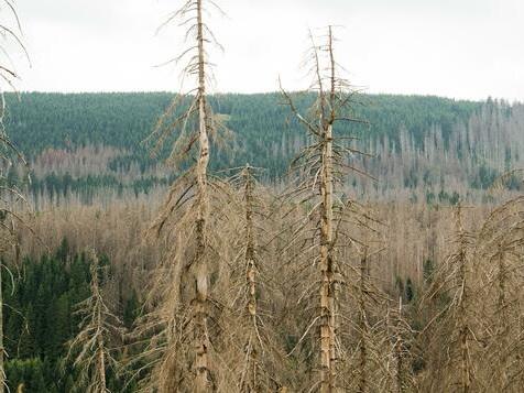 Für die Zukunft des Waldes fehlt es an einer Strategie