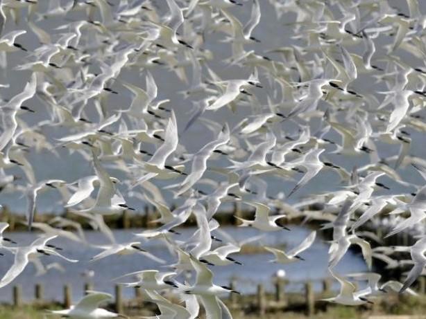 Auf dem Weg in den Süden: Zugvogeltage locken im Oktober ans Wattenmeer