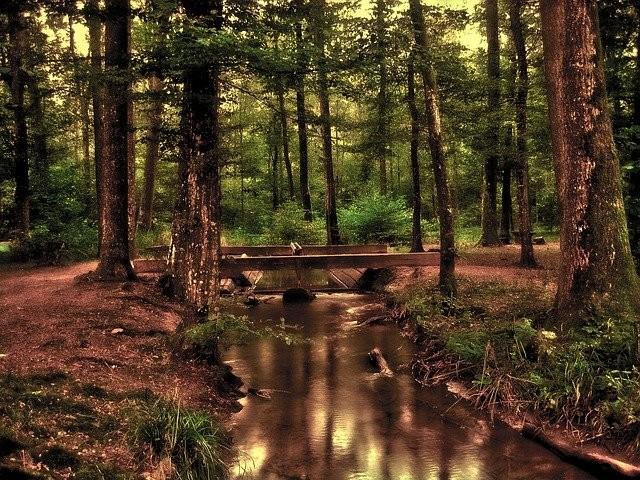 Projekt: Wald mit einem Förster erkunden