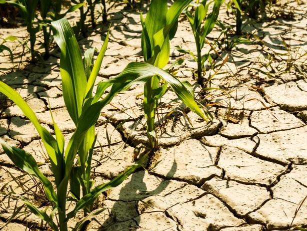 Der Boden verdurstet: Das ist der Grund für die drohende Dürre in Deutschland