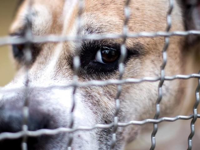 Ombudsstelle soll über Tötung von Tieren entscheiden
