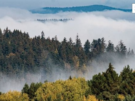 Biologische Vielfalt in Europa geht weiter drastisch zurück