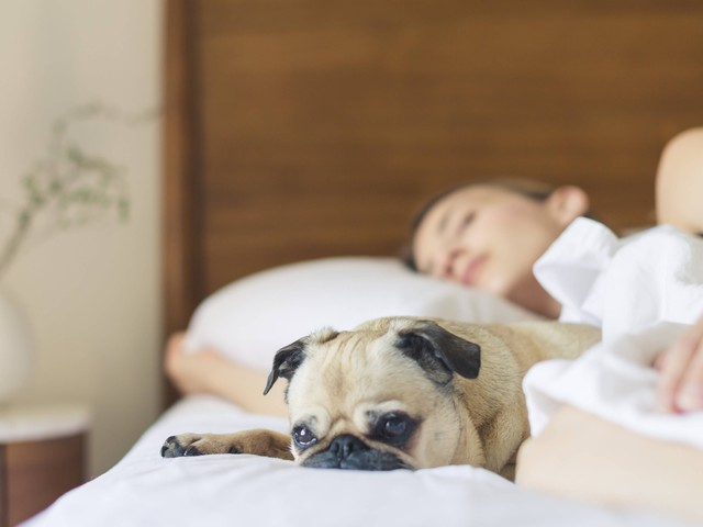 Frauen schlafen besser, wenn ein Hund neben ihnen liegt
