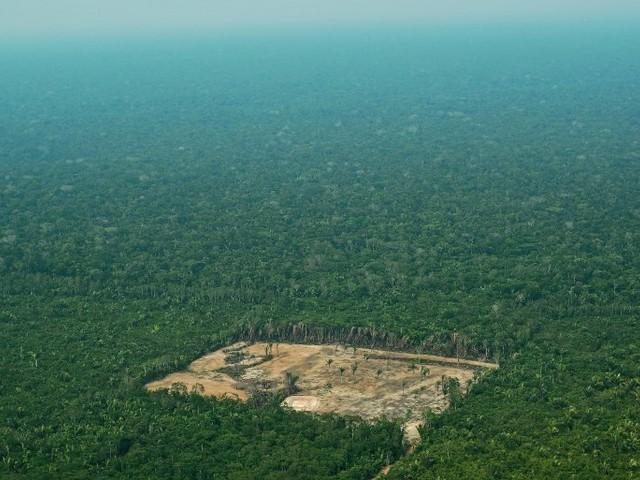 Brasiliens Amazonas: 7900 Quadratkilometer Regenwald binnen eines Jahres abgeholzt