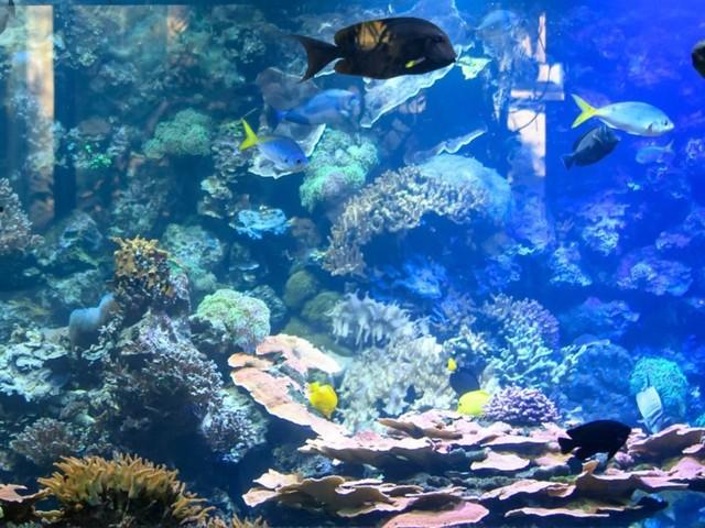 Tierpark Hellabrunn: Bunte Unterwasserwelt im Winter 2019 entdecken