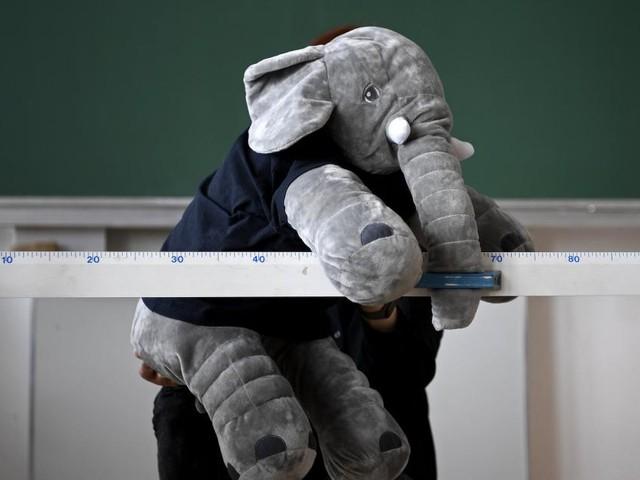 Wort des Jahres: Der Babyelefant hat ein Ablaufdatum