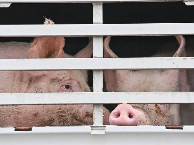 Wirbeltiere haben Gefühle - Briten wollen Vorreiter beim Tierschutz werden