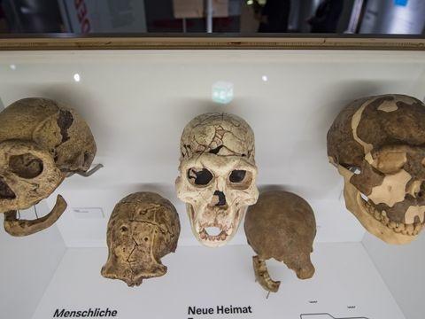 Sachsens Archäologiemuseum öffnet nächsten Dienstag