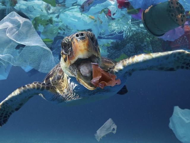 Bedrohung für Meeresbewohner: Plastikmüll ist Falle für junge Schildkröten