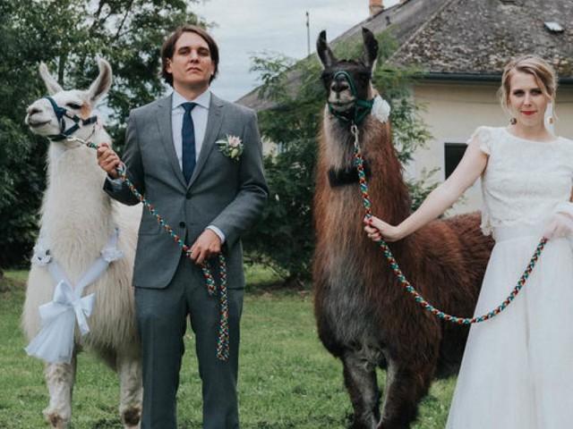 Hochzeitstrends 2019: Lamas, Traum-Locations und Nachhaltigkeit