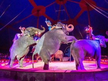 Klassische Zirkuskunst und moderne Show