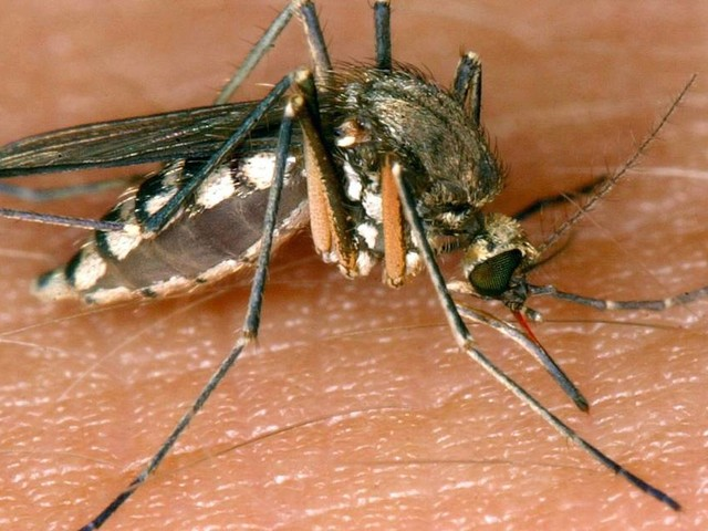 Kratzen, Kühlen, Hitze: Mehr Mücken durch starken Regen in NRW - was gegen Stiche hilft