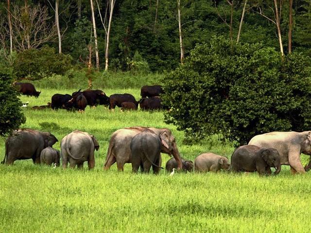 Wilhelma: In Stuttgart entsteht ein weltweit einzigartiges Elefantenhaus