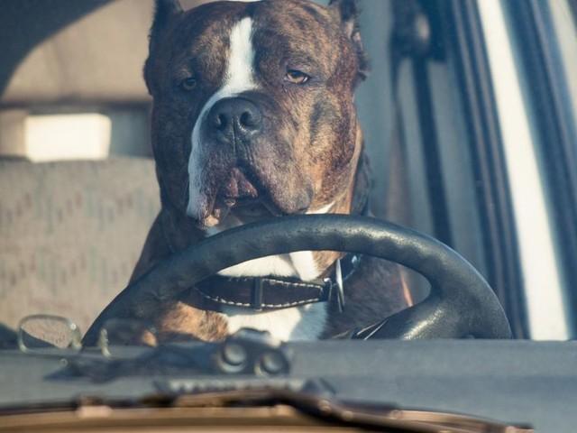 """Toter Hund in heißem Auto - Besitzer schrieb: """"Es geht ihm gut!"""""""