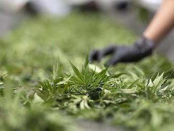 Apotheken befürchten Versorgungsengpässe bei medizinischem Cannabis
