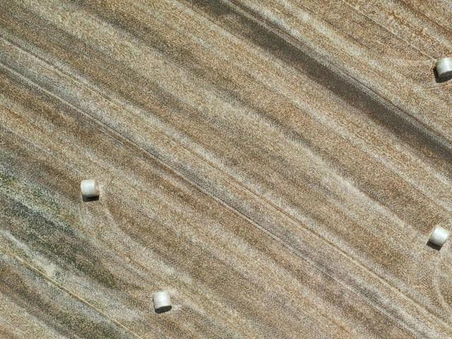 Landwirtschaft durch Wetterextreme schwer getroffen