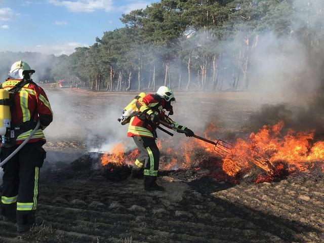 Feld und Wald brennen auf Usedom - starker Wind erschwert Löscharbeiten