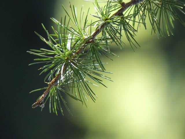 Magnetismus im Wald