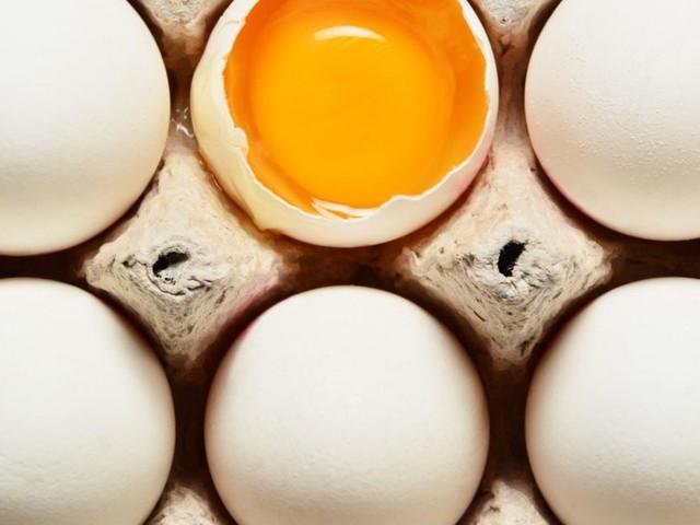 Kein Prozess um Eierfabrik: Staatsanwalt stellte Verfahren ein
