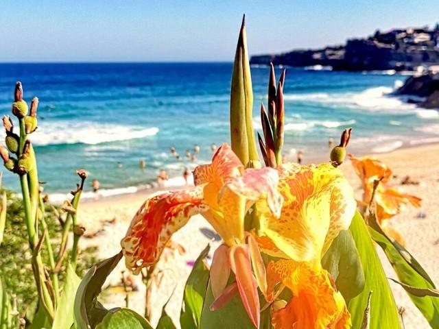 Diese Orte müssen Sie in Sydney unbedingt besucht haben