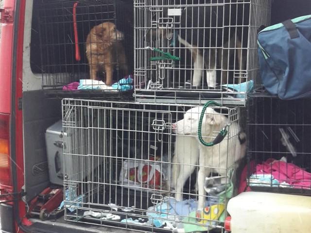 Pforzheim: Polizei befreit vier Hunde aus Kleinbus