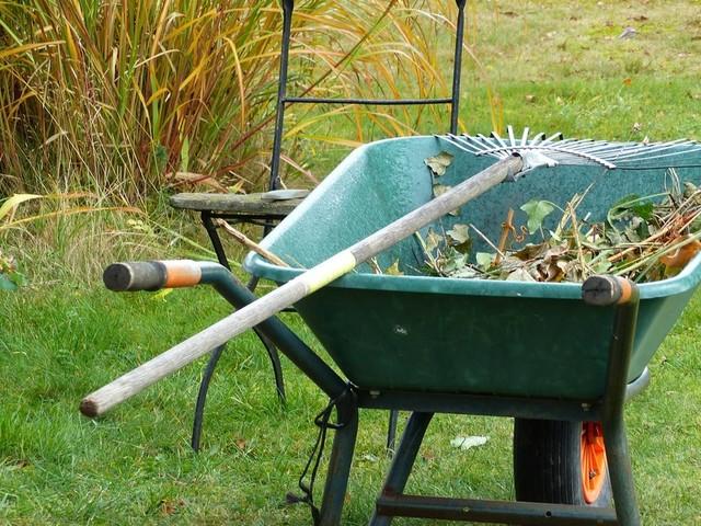 Jetzt ist die beste Zeit, um im Garten Bäume und Sträucher zu pflanzen