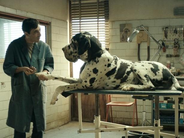 """Kino: Der Film """"Dogman"""", ein einsames Plädoyer für sanfte Töne"""