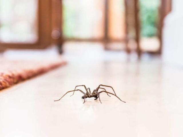 Überleben die Krabbler im Staubsauger?: Spinnen einsaugen