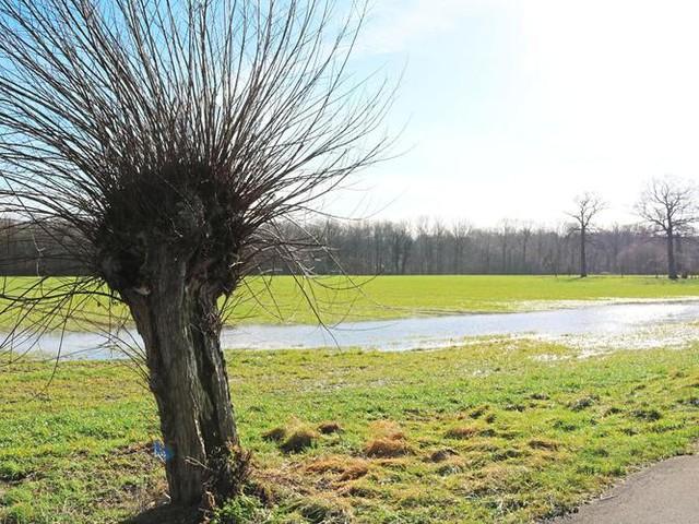 Münsterland: Borkenkäfer und Eichenprozessionsspinner trotzen dem Frost