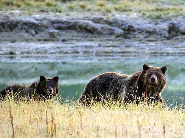 Beim Zelten in Kanada: Grizzlybär tötet schlafenden Touristen - Freundin alarmiert die Rettungskräfte