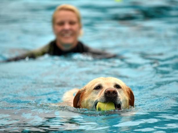 Fotostrecke: 5. Iserlohner Hundeschwimmen im Heidebad