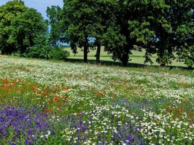 119 Pflanzenarten in Deutschland ausgestorben