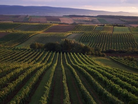 Wein aus Österreich in Deutschland zunehmend gefragt