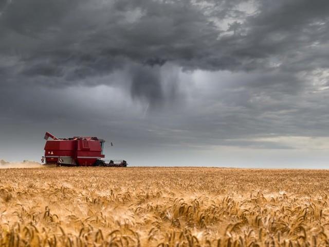 Regionale Lebensmittel: 2021 rar und teuer