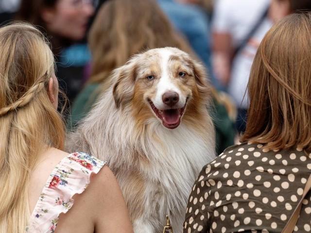 Verleihung in Köln: Preise für erfolgreiche Hunde bei Instagram verliehen